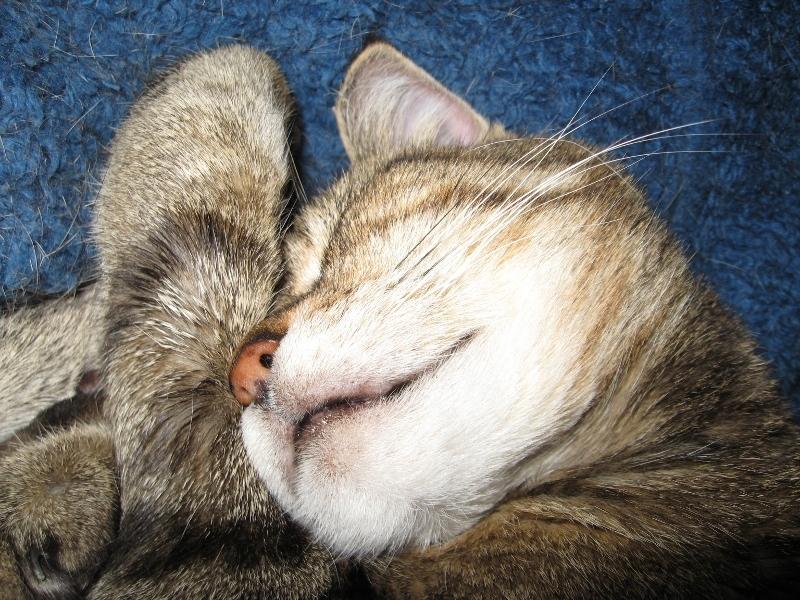 wampus cat harry potter